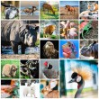 Collage of animals — Stock Photo #67170863