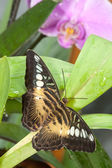 Spotted butterfly — Stock Photo