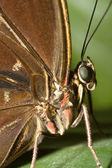 Butterfly macro — Stock Photo