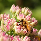 Bee in colorful summer flower — Stock Photo