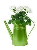 Green retro watering can with white roses — Stock Photo