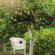 White wicker chair under orange fruit tree — Stock Photo #58452589