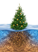 Green Christmas tree with roots beneath — Stock Photo