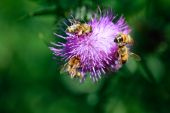 Bees collecting nectar. Close up view — Stock Photo