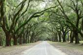 Canopy of oak trees covered in moss. Forsyth Park, Savannah, Geo — Stock Photo