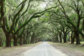 Canopy of oak trees covered in moss. Forsyth Park, Savannah, Geo — Foto de Stock