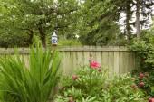 Flor, crescendo na cerca de madeira velha — Fotografia Stock