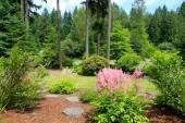 красивый пейзаж вашингтон в летнее время — Стоковое фото