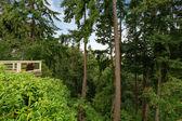 Walkout deck overlooking greenbelt — Stock Photo