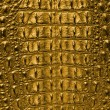 Gold Crocodile bone skin — Stock Photo #57281837
