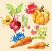 Watercolor illustration of vegetables — Stock Vector
