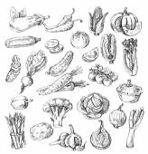 Hand drawn vegetable — Stock Vector