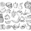 Hand drawn fruit — Stockvektor  #55163995