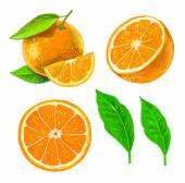 Picture of orange — Stock Vector