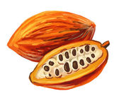 Picture of cacao — Stock Vector