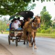 Постер, плакат: Horse drawn carriage in Cuba