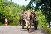 Contryman riding an ox drawn carriage — Stock Photo
