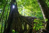 Light through the trunk of a tree — Stock Photo