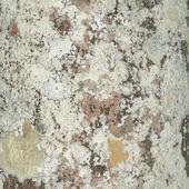 Royal Palm Trunk Texture — Stock Photo