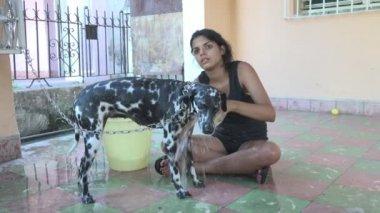 Girl bathing her Dalmatian dog — Stock Video