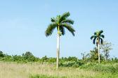 Green tropical countryside — Stock Photo