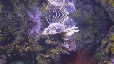 Coral reef featuring great variety of fish — Stock Video