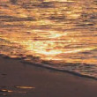 Beautiful Golden Sunset in Tropical Beach — Stock Video #70161989