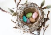 Easter Celebration: Real Bird Nest Full of Easter Egg Candies — Stock Photo
