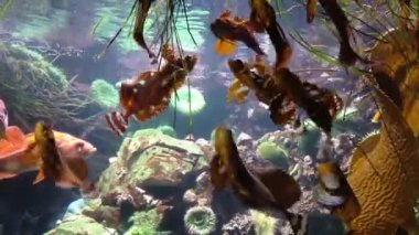 Fish underwater inside fishtank — Stock Video