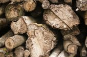 Cross sections of sawn logs — Stock Photo