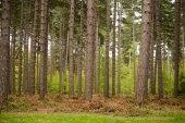 A Walk Through The Trees — Stock Photo