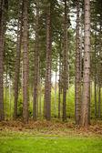A Walk Through The Trees — Zdjęcie stockowe
