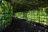 Vegetable garden shady — Zdjęcie stockowe