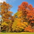 Colorful autumn trees — Stock Photo #53175127