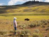 Woman watching a North American Buffalo Grazing in Field with ri — Stock Photo