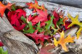 Autumn Leaves on Driftwood  — Stockfoto