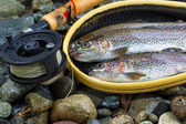 Fly Reel and pole with trout in net — Stock Photo
