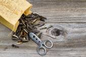 Pile of sunflower seeds with bag and opener on rustic wood  — Stock Photo
