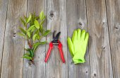 Garden tools for pruning plants — Stock Photo