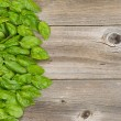 Collection of fresh large basil leafs on aged wooded table — Stock Photo #75074907