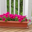 Постер, плакат: Colorful flowers in bloom on cedar wood deck with trees in backg