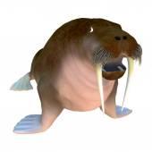 Walrus — Стоковое фото