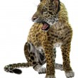 Wild Jaguar — Stock Photo #62172477