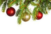 Decorative balls on fir — Stock Photo