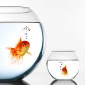 Twee gouden vissen — Stockfoto