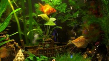 Aquarium — Vídeo de Stock