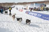 Kamchatka Dog Sled Racing Beringia — Stock Photo
