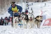 Kamchatka Dog Sledge Racing Beringia — Stock Photo