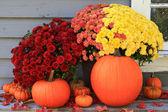Autumn and Thanksgiving decoration — Stock Photo