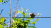 Bird on a wire — Stock Photo